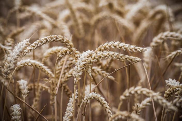 Feld | Landwirtschaft | Agrar | Fotograf
